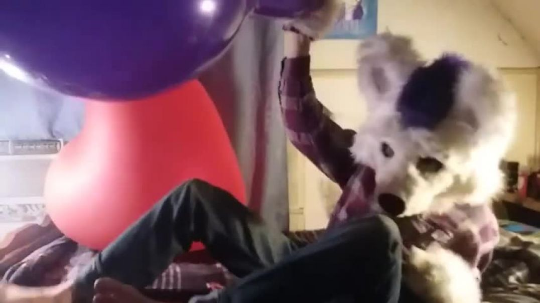 Blowing and Playing with a Necked Tuftex 24 inch Balloon