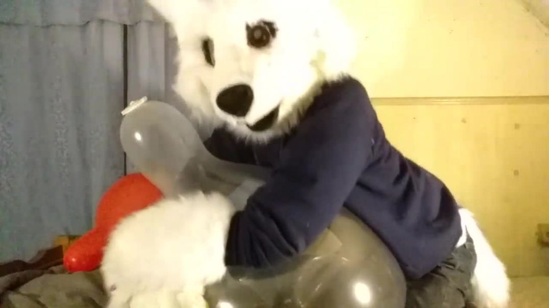 Playing With a Clear Tuftex 24 inch Balloon in My Fursuit!