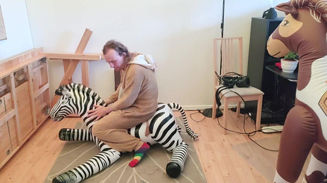 medium zebra ass stabb