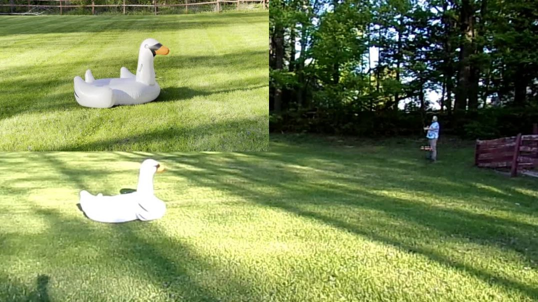 Shooting inflatable swan with bow and arrows