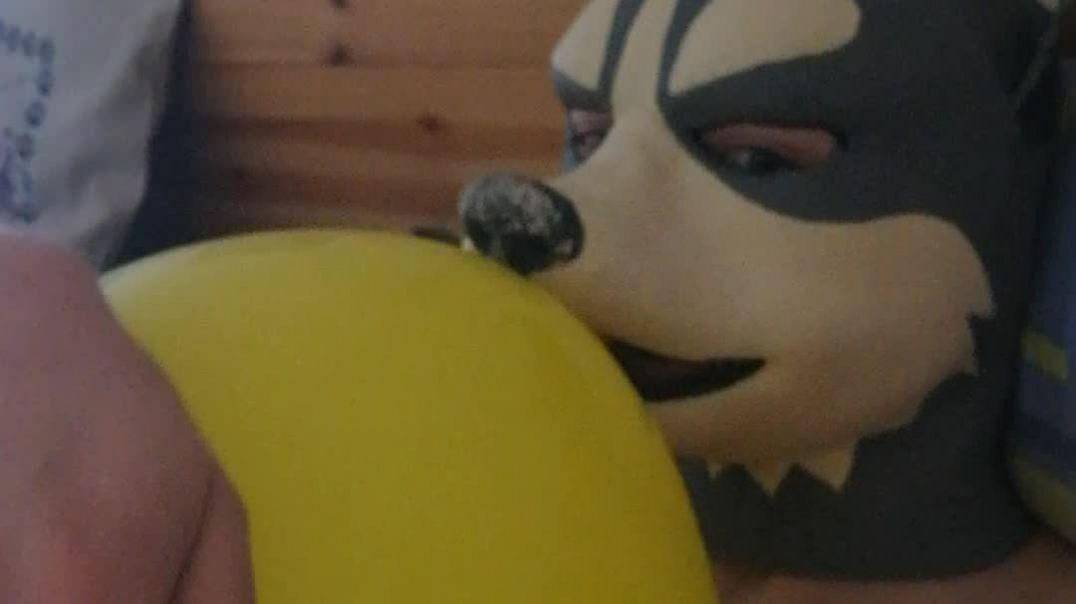 Rubber Husky inflates a Balloon
