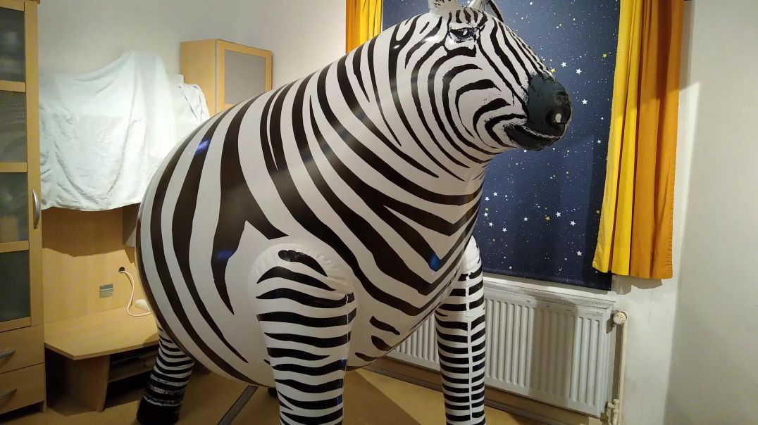 Inflate to pop stretched IW zebra - front