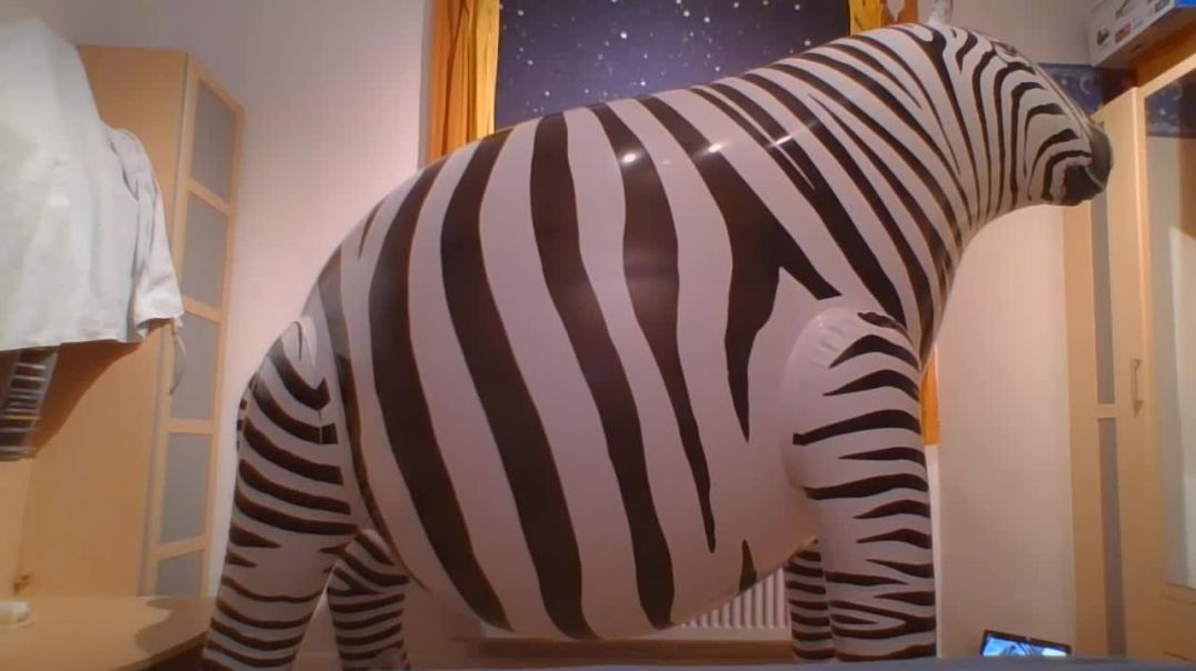 Inflate to pop stretched IW zebra - side